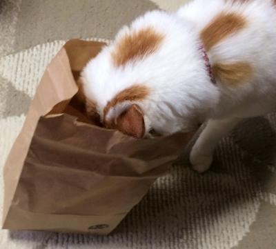 愛猫きなこ・わかたけ 赤い尻さん